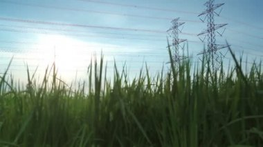 Electric pole, High voltage towers and sky in rice green filed dolly shot — Stock Video