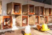 Henhouse farmyard, hanged on wall for chicken hatch — Stock Photo