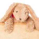 Rabbit, holding old grunge canvas fabric burn edge for happy eas — Stock Photo #72293907