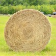 Hay roll in the farm field — Stock Photo #74967235