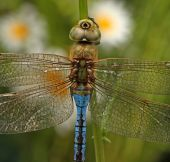 Close up of a dragonfly — Stock Photo