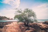 Beach Tree and blue sea vintage — Stock Photo