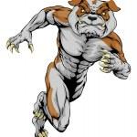 Sprinting Tough Bulldog Mascot — Stock Vector #83468680