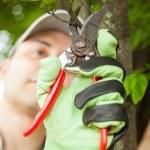 Gardener pruning tree — Stock Photo #54883253