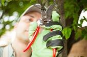 Gardener pruning tree — Stock Photo