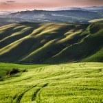 vacker utsikt över gröna fält och ängar vid solnedgången i Toscana — Stockfoto #52394051