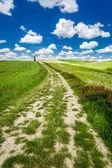 Cracked dirt road between green fields — Stock Photo