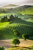 Farm of olive groves and vineyards — Stock Photo