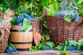 Grapes, demijohn and wicker baskets — Stock Photo