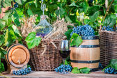 Red wine during the grape harvest in the countryside — Stock Photo