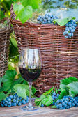 Glass of red wine and a wicker basket with grapes — Stock Photo