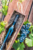 Grapes and red wine in a wooden box — Stock Photo