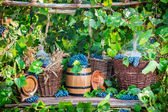 Grape harvest in a village in old fashioned style — Stock Photo