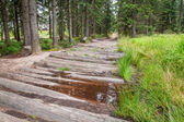 Wooden mountain trail in the forest — Foto Stock
