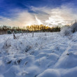 Forest path covered with snow at sunrise — Stock Photo #54509429