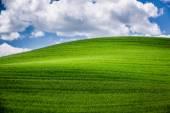 Green field in Tuscany — Stock Photo