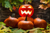 Lord van de pumpkins — Stockfoto