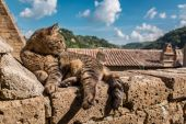 Cat lying on a stone wall — Stock Photo
