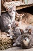Small kittens with mom in Tuscany — Stock Photo