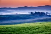 Farm of olive groves and vineyards in foggy sunrise — Stock Photo