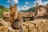 Curious cat on the stone wall in the town — Stock Photo