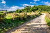 Dirt road in the countryside, Tuscany — Stock Photo