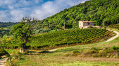 Fields and vineyards in the countryside, Tuscany — Stock Photo