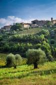 View of a small town with vineyards and olive trees — Stock Photo