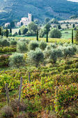 View of the vineyards and monastery in Tuscany — Stock Photo