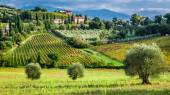 Vineyards and olive trees in a small village, Tuscany — Stock Photo