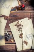 Collecting biological herbarium for lesson — Stock Photo