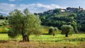 Vineyards and olive groves in Tuscany — Stock Photo