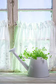 Watering can standing in a sunny window with herbs — Stock Photo