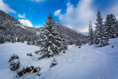 Snow path in the mountain valley — Stock Photo