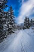 Snow capped mountain path between the trees — Stock Photo