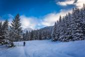 Winter expedition to the mountains — Foto de Stock