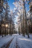 Frozen winter forest in full sunlight — Stock Photo