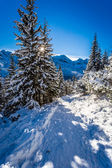 Sunny winter expedition to the mountains — Foto de Stock