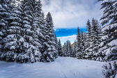 Winter full of snow mountain path — Photo