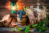 Tasting red wine straight from the demijohn — Stock Photo