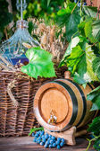 Barrel and demijohn full of red wine — Stock Photo