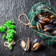 Fresh mussels on ice with ingredients — Stock Photo #67663995