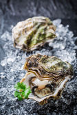 Tasty oyster in shell on crushed ice — Stockfoto