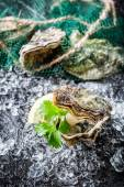 Delicious oysters on black rock ready to eat — Stock Photo