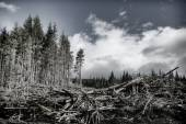 Canadian Clearcut — Stock Photo