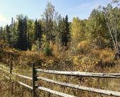 Fall Fences — Stock Photo