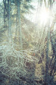 Warm Frost — Foto de Stock