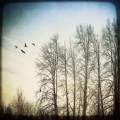 Birds and Birches — 图库照片