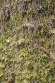 Thick Moss — Stock Photo