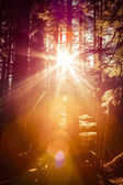 Forest Sunburst — Stockfoto
